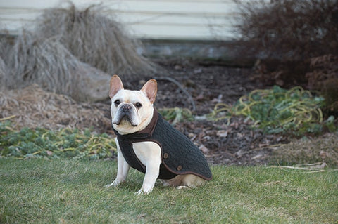 dog jacket, nano knit coat, repelzit, repelz-it, nano technology, nano treatment, long-lasting dog coat