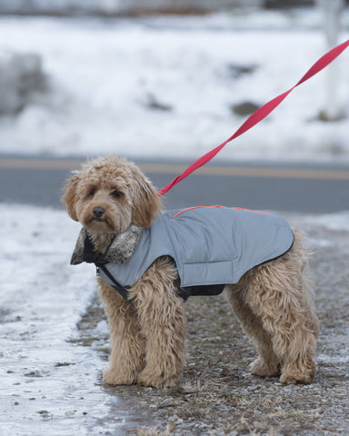 dog jacket, tamarack jacket, repelzit, repelz-it, nano technology, nano treatment, long-lasting dog jackets, winter dog jacket, fleece liner, meteor, reflective dog jacket, meteor technology