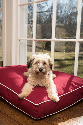 dog beds, rectangle beds, chamber design, repelzit, repelz-it, nano treatment, berry