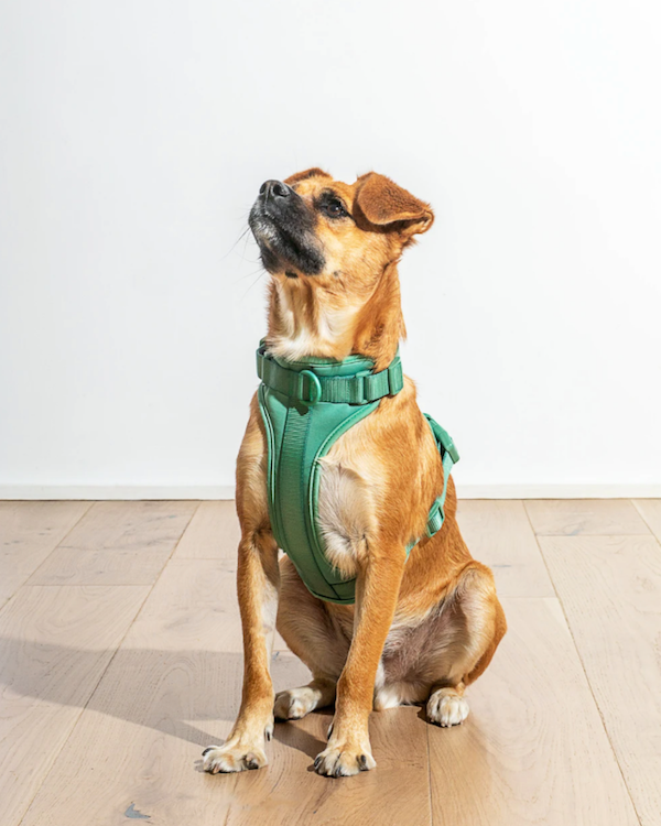 WILD ONE CUSHIONED HARNESS SPRUCE GREEN