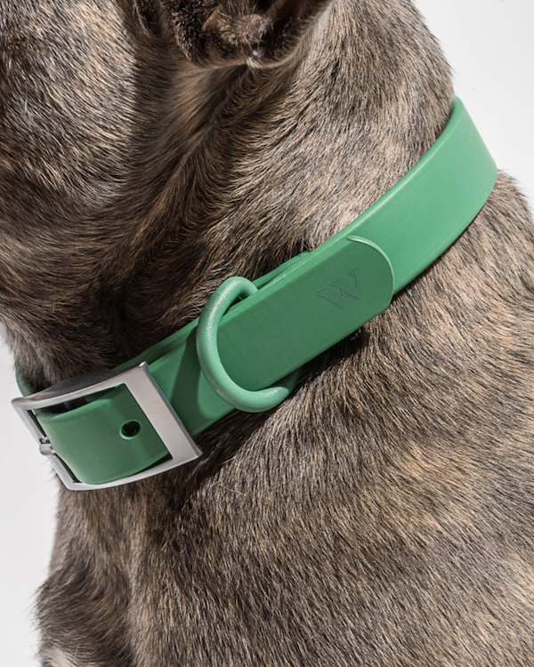 wild one waterproof dog collar spruce green