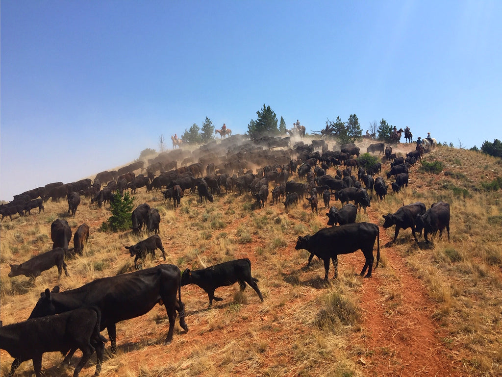 Cattle Battle Gone Good