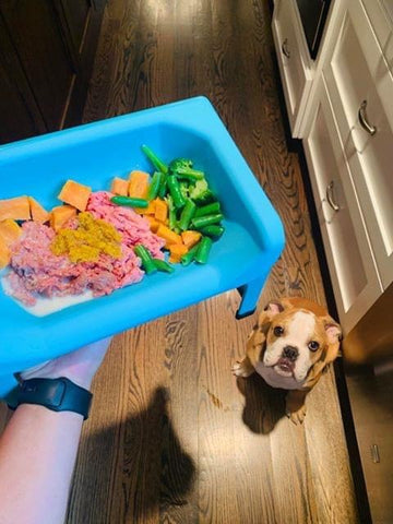 Food Dog Trough & Dog Bowl : Fluff Trough - Dog Feeding Troughs, Dog Bowls & Accessories