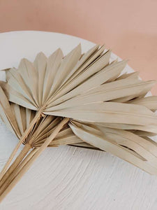 Dried sun cut palm bunch