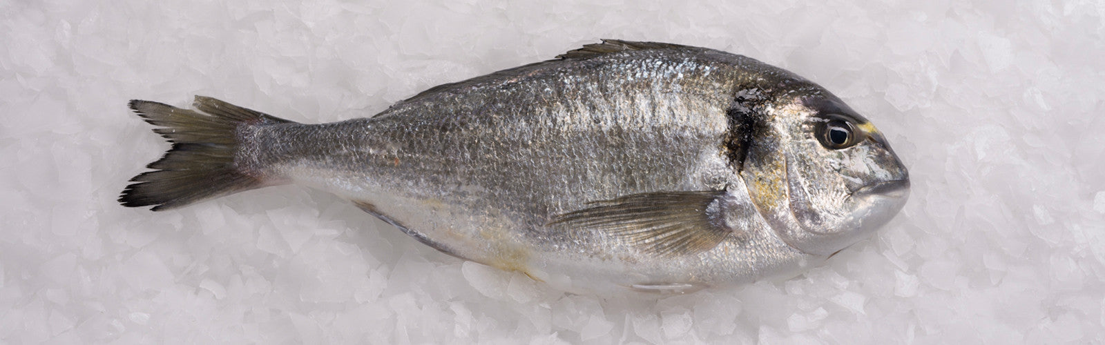 pierless fish - Picture Of Fish