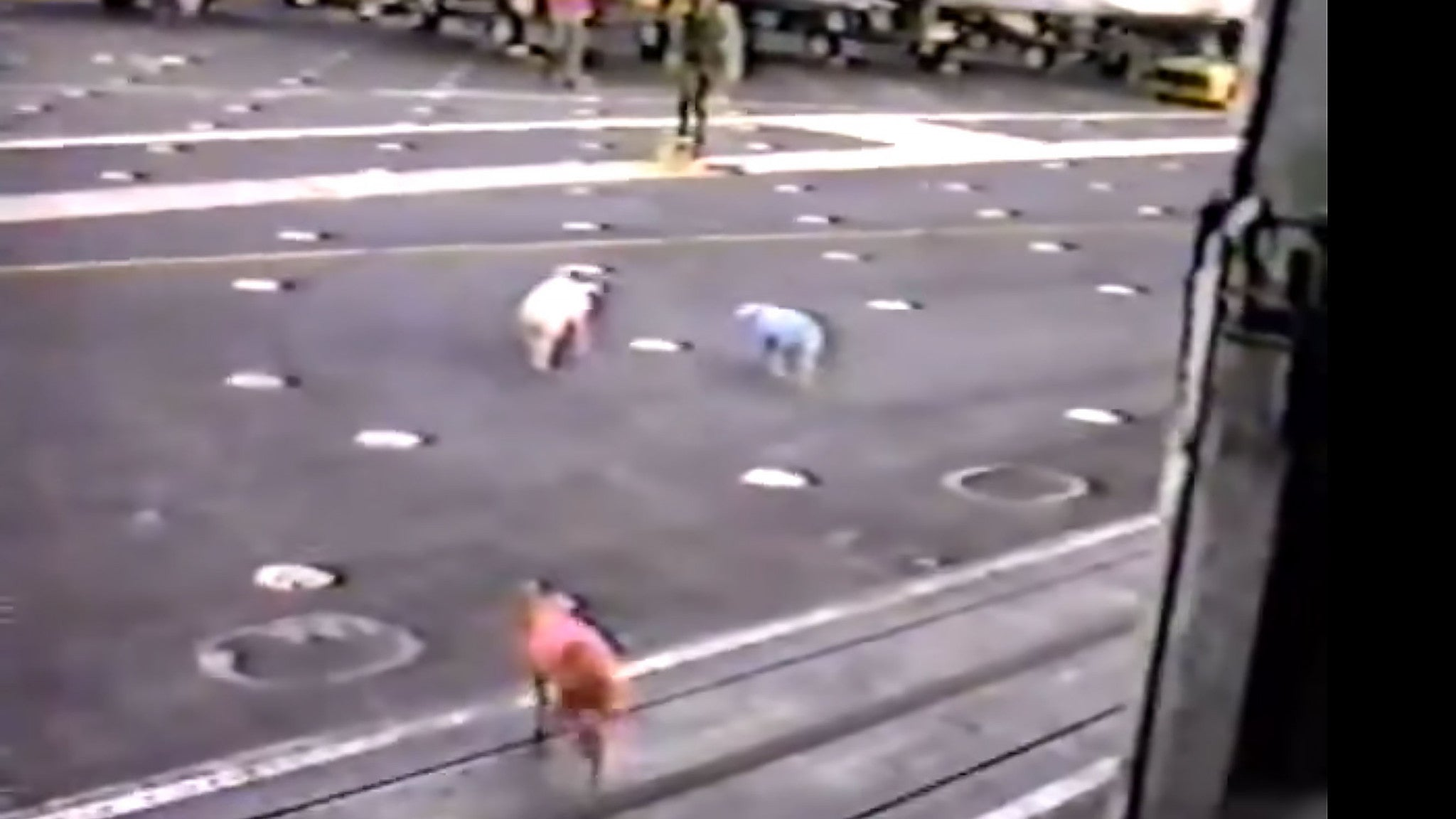 Watch The USS America drop 3 greased pigs on The USS Kennedy's deck