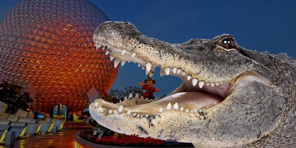 5 Things You Need to Know About The Walt Disney World Alligator Attack