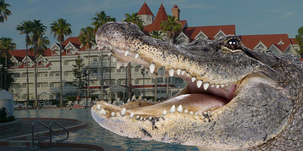 Alligator drags child into water at Disney World resort in Orlando, Florida