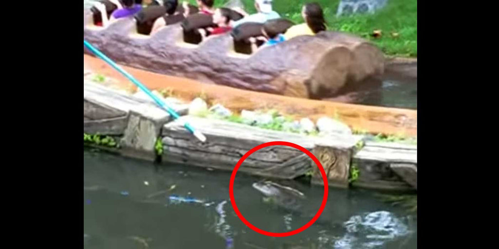 VIDEO: Disney World Employee Fights Off Alligator To Protect Guests