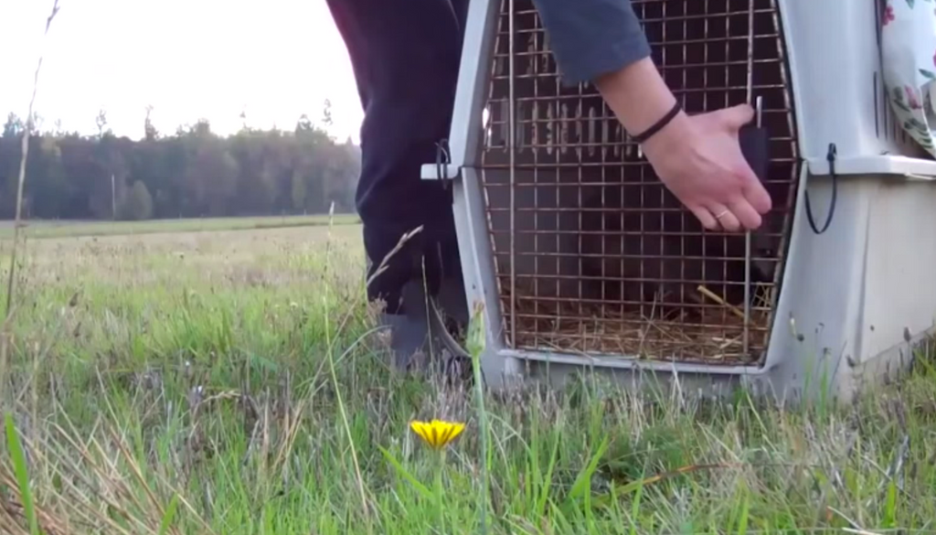 VIDEO: Animals Being Freed For The First Time In Their Lives