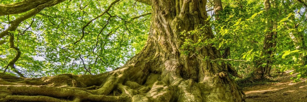 5 Ways You Can Help Trees - forest image