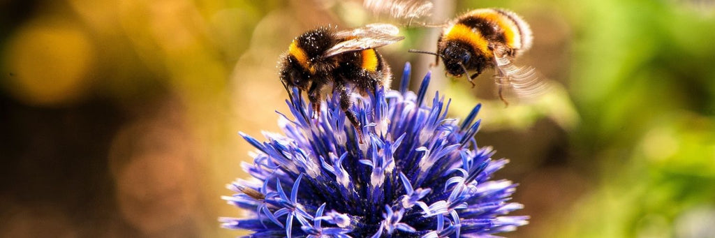 All About Bees and How to Help Them - bees on purple flower