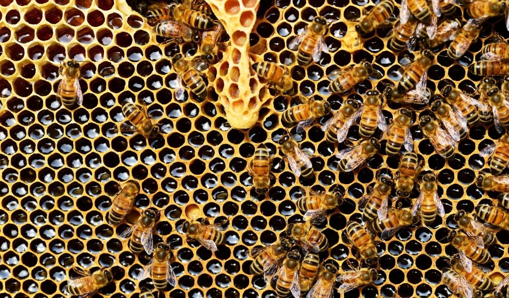 All About Bees and How to Help Them - honeycomb