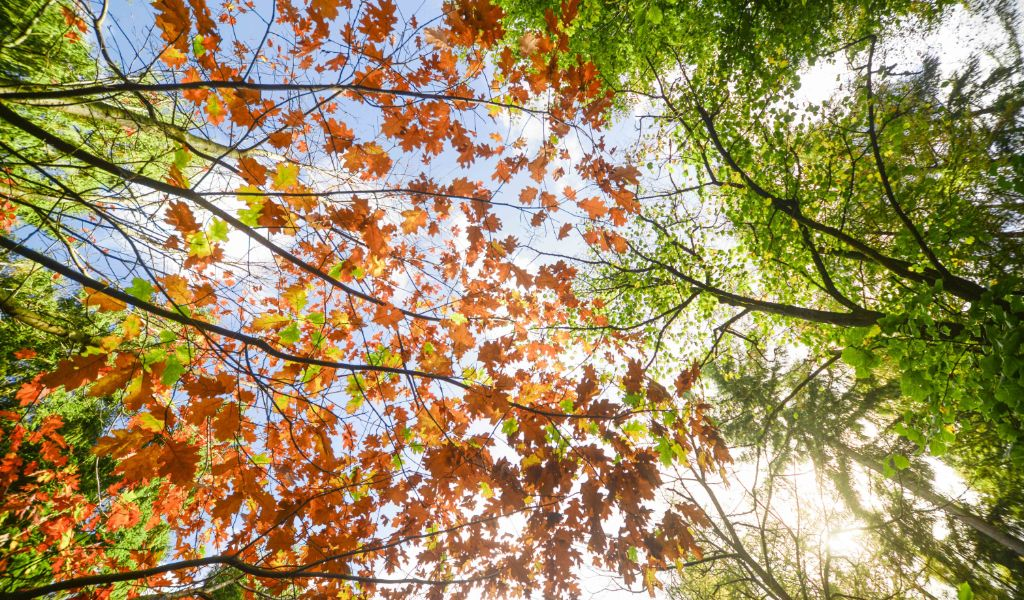 Dedicate a Tree - Eco Gifts for Nature Lovers
