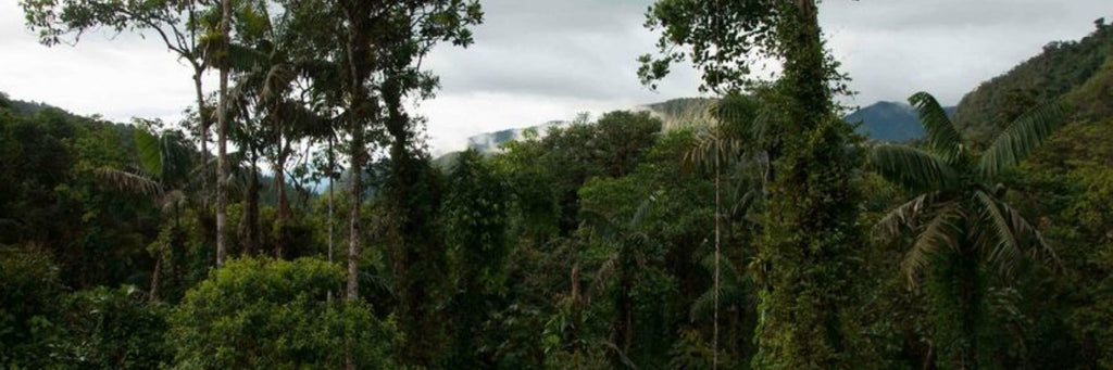 Donation to World Land Trust protecting forests in Ecuador and Mexico