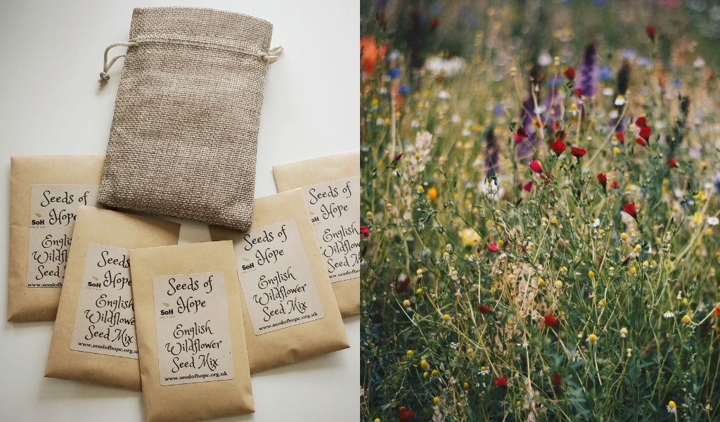 Father's Day Gifts You'll Both Love - ethical and sustainable father's day gift ideas - wildflower seeds gift set