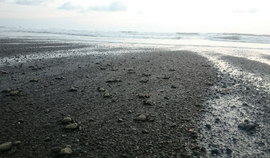 How Does Plastic Pollution Harm Turtles Baby turtles on beach