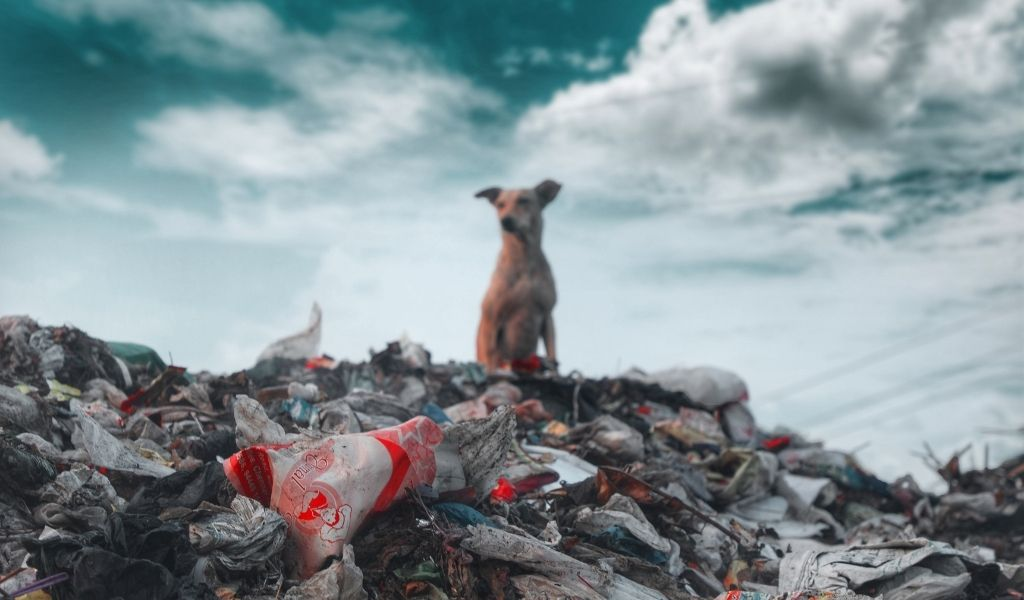 How Does Plastic Pollution Harm Turtles Dog on plastic pollution