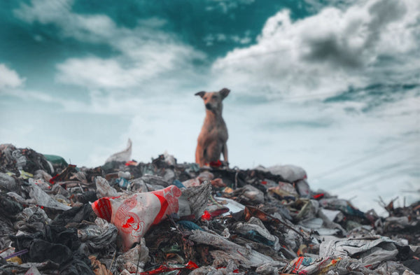 Dog on a pile of plastic pollution