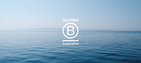 Why Do We Value the B Corp Movement?