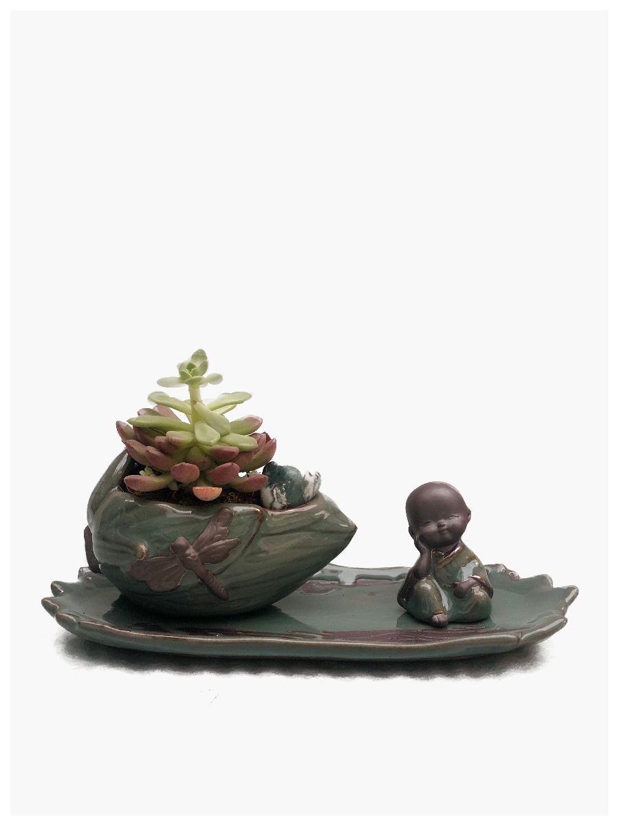 Monk Tray with Succulent