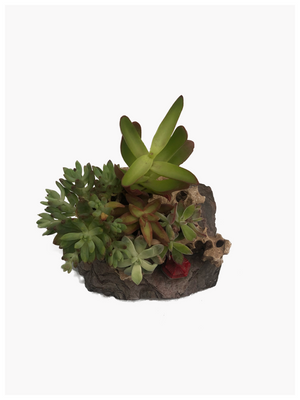 Rock Tray with Succulent