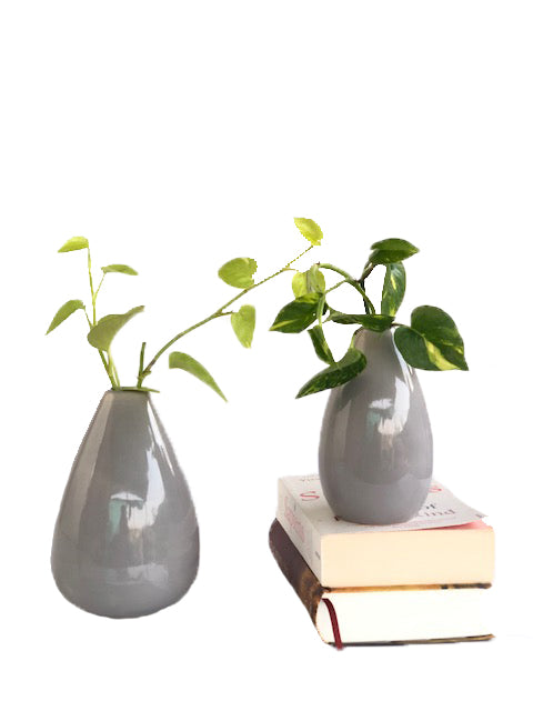 SET OF VASE with Hydroponic Plants