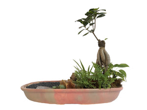 Creek Garden with Log hut and Ficus Bonsai