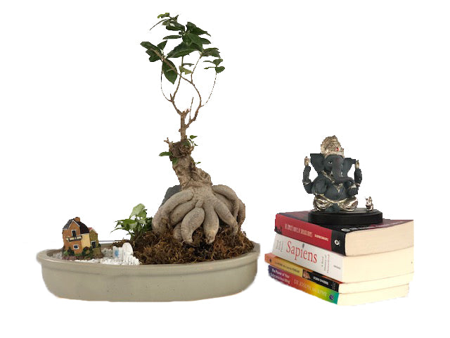 Sweet Home feel with Ficus Bonsai