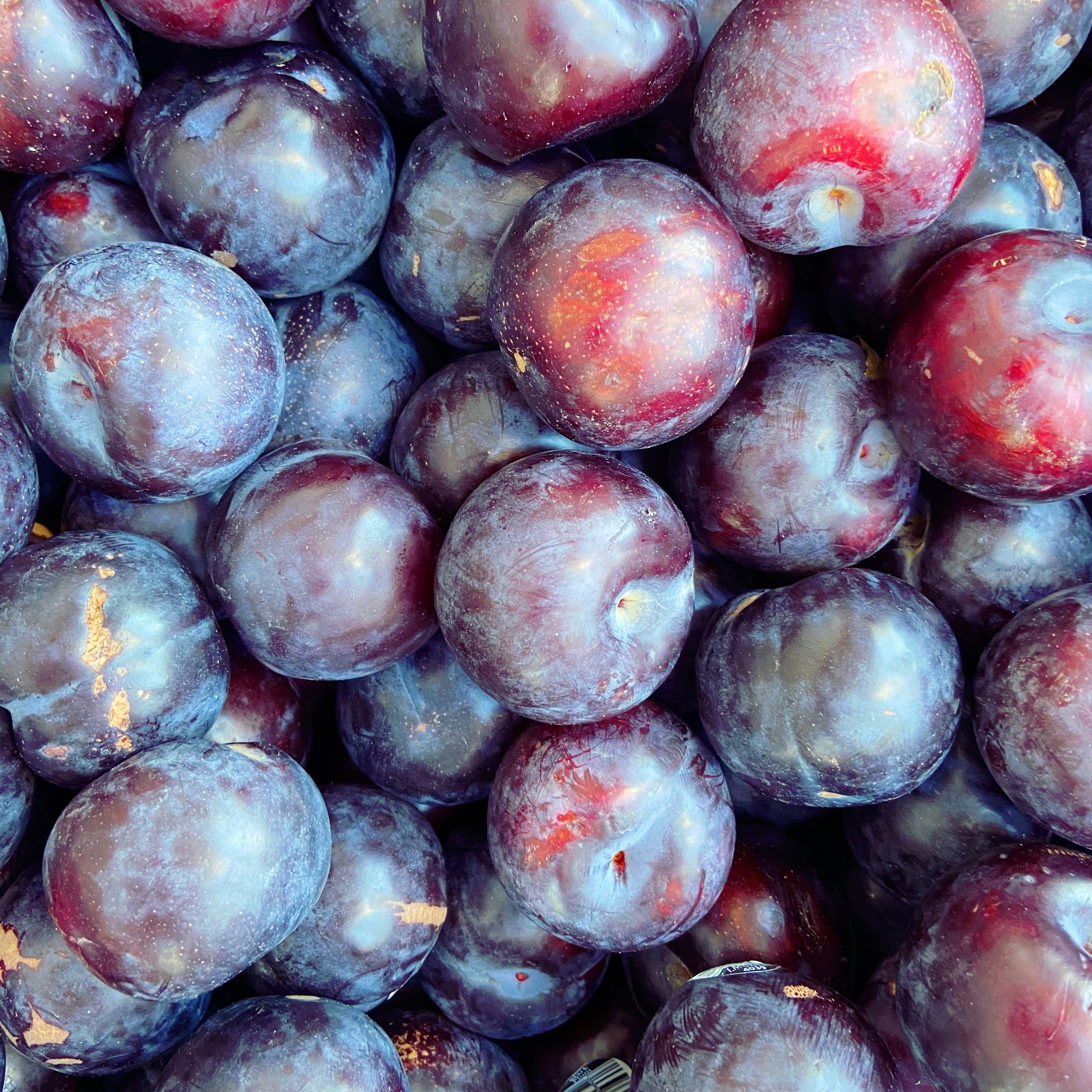 Plums - The Farm Shop Toowoomba
