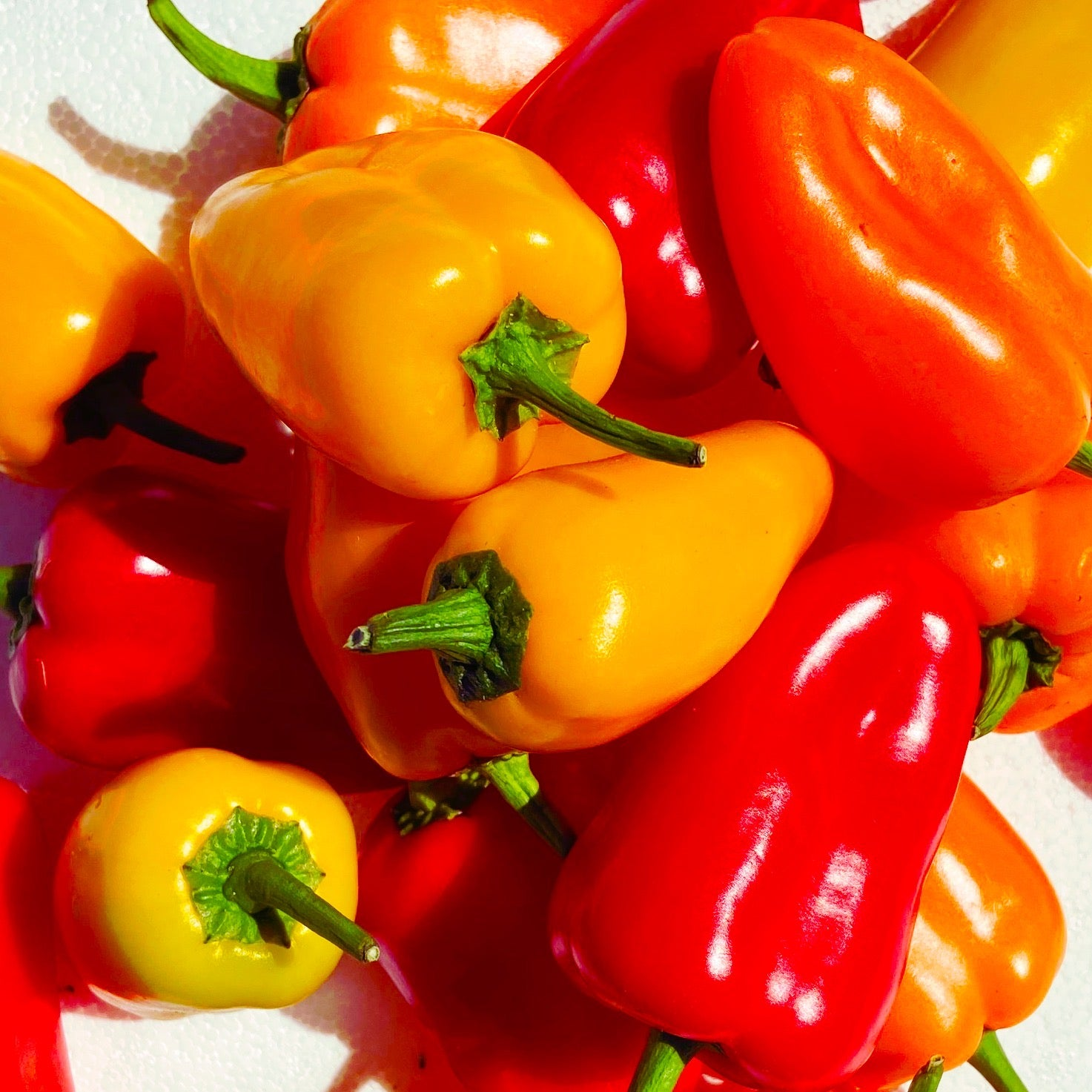 Mini Sweet Capsicums - The Farm Shop Toowoomba
