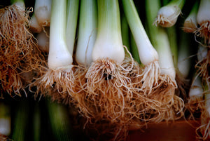 Spring Onions - The Farm Shop Toowoomba