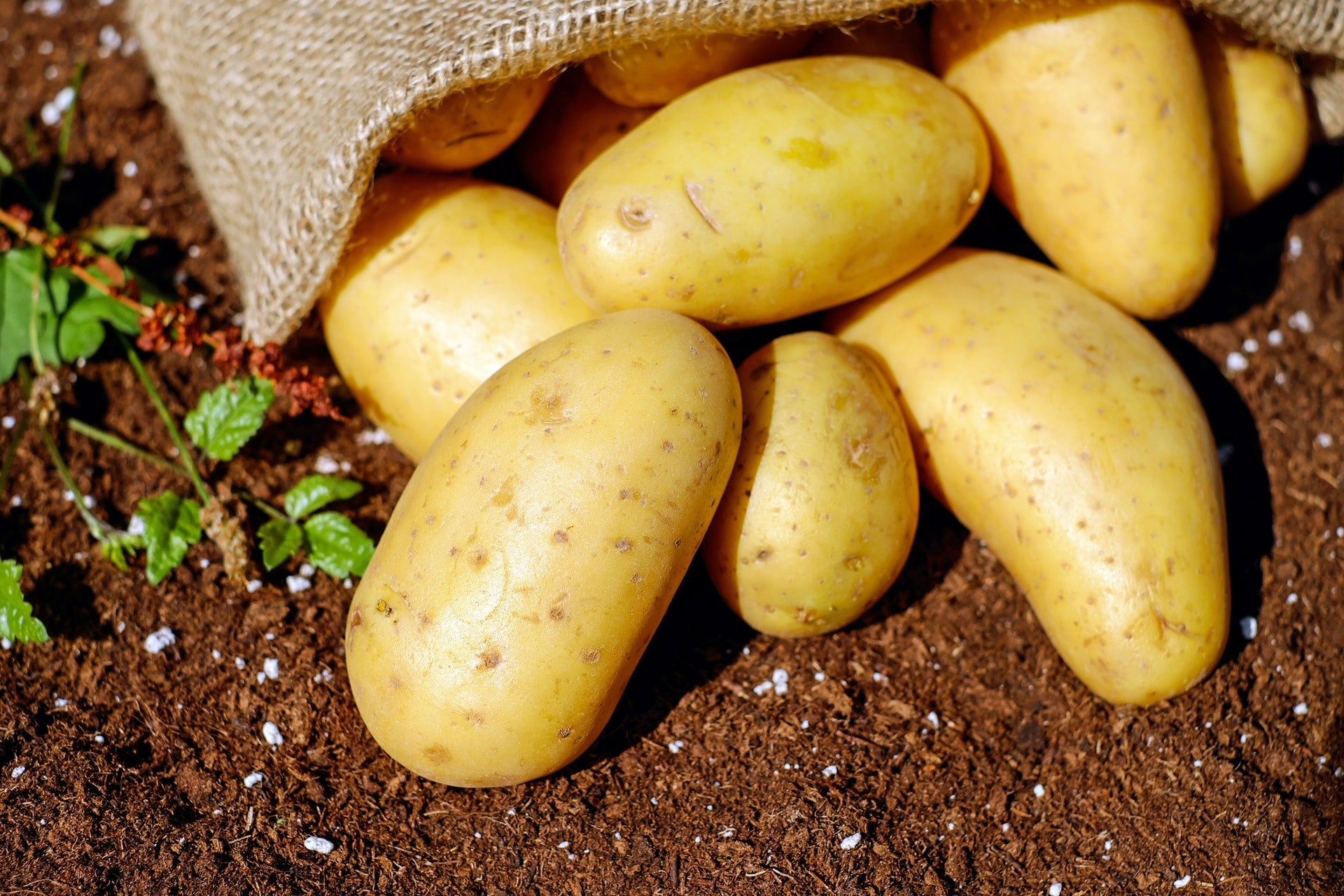 Potatoes - The Farm Shop Toowoomba