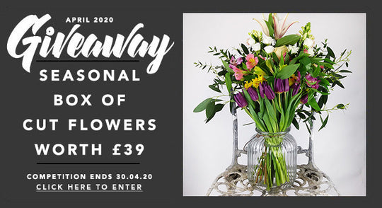 GBF Giveaway April 2020: A Box of Seasonal Cut Flowers Worth £39!