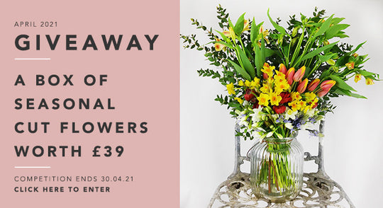 GBF Giveaway April 2021: A Box of Cut Flowers Worth £39!