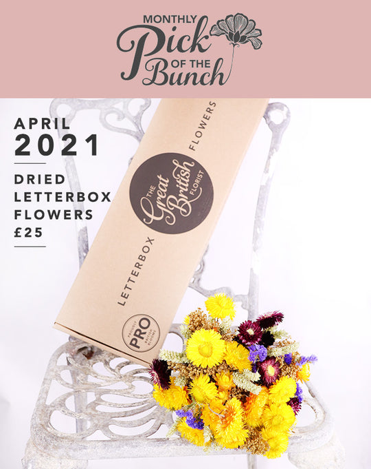 Introducing our APRIL Monthly Pick of the Bunch Dried Letterbox Flowers