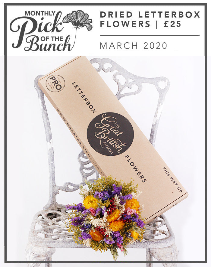 Monthly Pick of the Bunch Dried Letterbox Flowers -March 2020