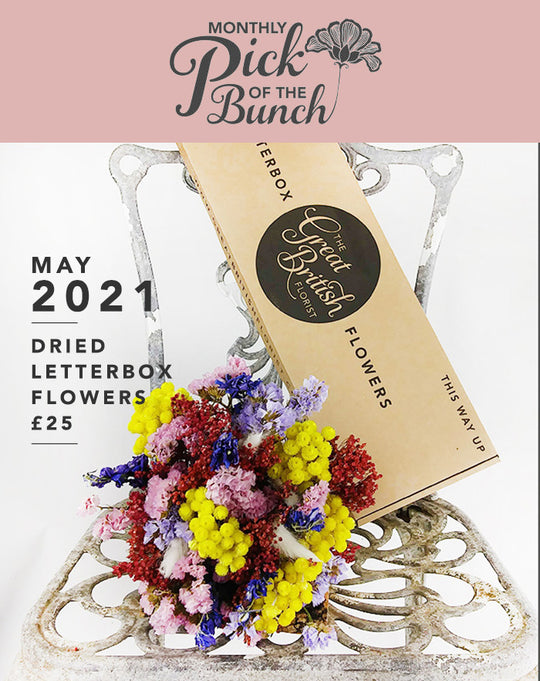 Monthly Pick of the Bunch Dried Letterbox Flowers - May 2021