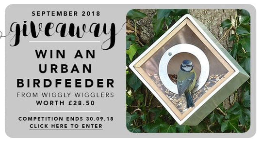 GBF Giveaway September 2018: An Urban Bird Feeder