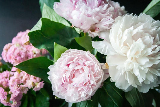 Great British Blooms: Peonies