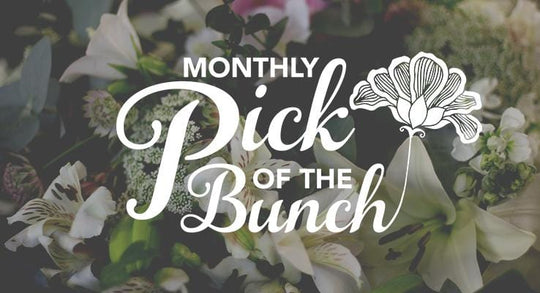 Our Monthly Pick of the Bunch is HERE!