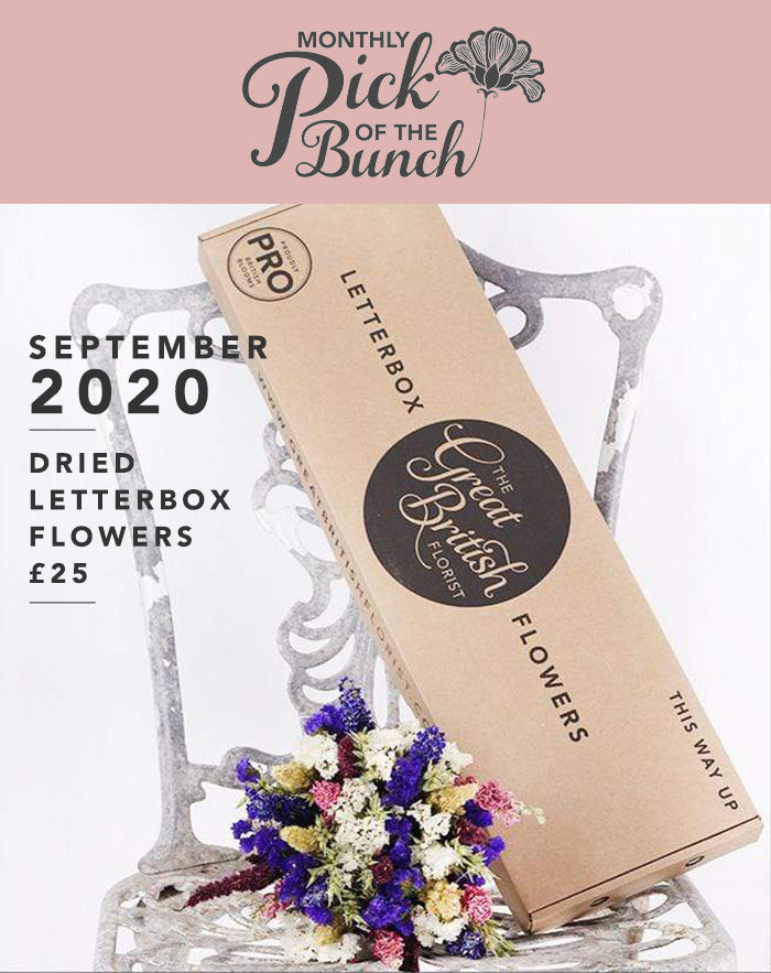 Monthly Pick of the Bunch Dried Letterbox Flowers - September 2020