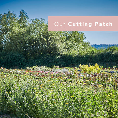 The Great British Florist cutting patch