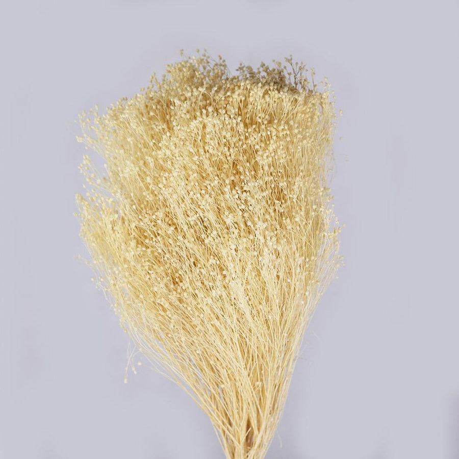 Broom Bloom Bleached