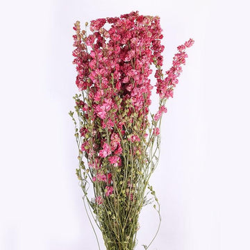 Pink Delphiniums