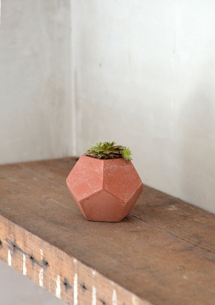 Decagon Concrete Pot in Terracotta, City Grey, Dark Charcoal or Sage Green with Echeveria Succulent Set