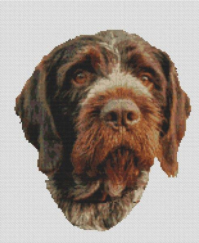 German Wirehaired Pionter