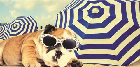 24 Dog with Sunglasses and Umbrellas Velour Beach Towels 30 x 60 Inch #BT6829