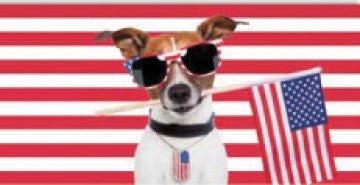 24 Patriotic Chihuahua Holding Flag Velour Beach Towel 30 x 60 Inch #BT6869