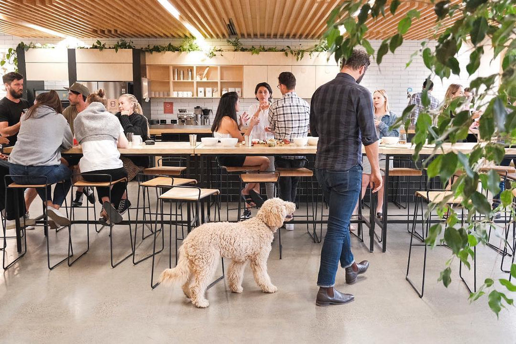 A Creative Workspace Designed For You And Your Dog